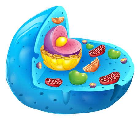 membrana cellulare: Sezione trasversale di una cellula eucariotica