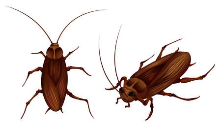 dorsal: two detailed illustrations of cockroaches Illustration