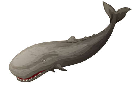 toothed: illustration of a toothed whale  Illustration