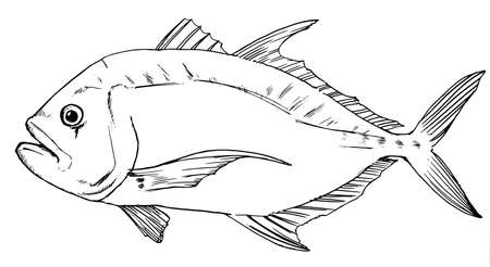 indian fish: Black and white sketch of the Giant Travelley