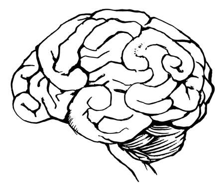 Sketch of the human brain Stock Vector - 16771583