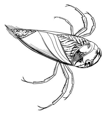 sketch of a water beetle Stock Vector - 16771596
