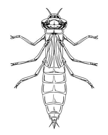 sketch of a dragonfly nymph