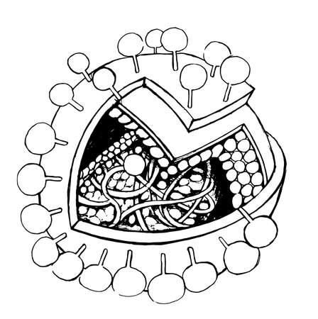 epitope: Sketch of a Generic Virus Illustration