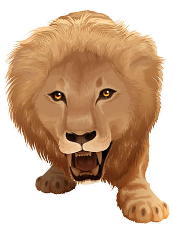 carnivora: Lion illustration - species Pathera leo