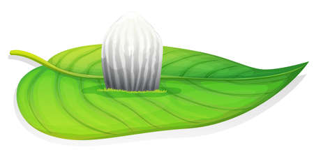 insecta: Illustration of the monarch butterfly egg stage