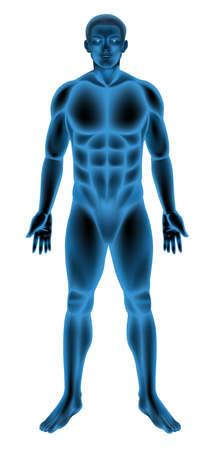 anatomie mens: Illustratie van een generieke mannelijk lichaam