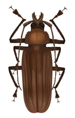 Illustration of a Titan beetle  - Titanus giganteus Vector