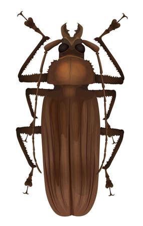 insecta: Illustration of a Titan beetle  - Titanus giganteus Illustration