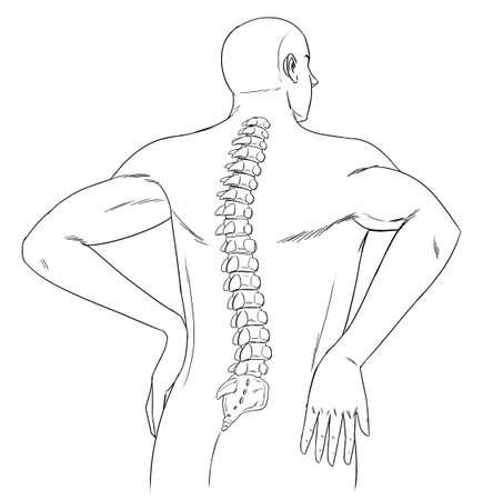 columna vertebral: Esquema de la espalda y la columna vertebral humana