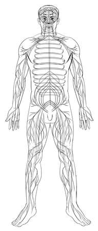 Outline illustration of the human nervous system Stock Vector - 16771566