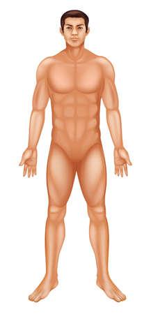 정면: 일반적인 남성의 몸의 그림