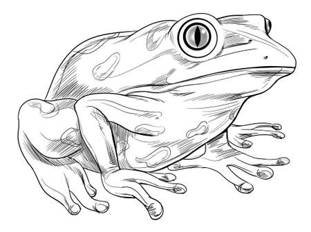side viewing: Black and white sketch of a frog Illustration