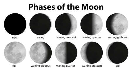 phase: Illustration of the phases of the moon Illustration