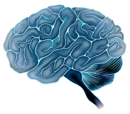frontal lobe: An illustration of the human brain Illustration