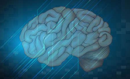척수: 파란색 배경을 가진 인간 두뇌의 그림