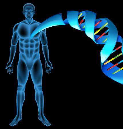 genetica: Illustrazione della struttura dell'acido desossiribonucleico Vettoriali