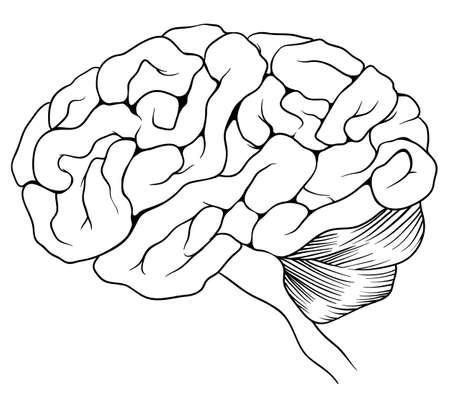 denkender mensch: Eine Abbildung des menschlichen Gehirns