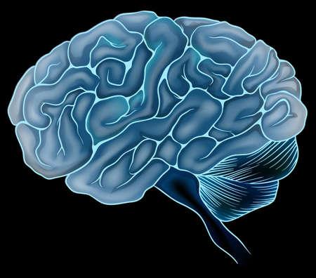 cerebro humano: Una ilustraci?el cerebro humano Vectores