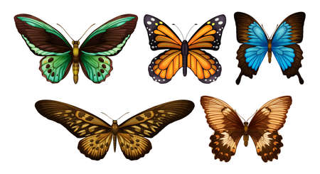 milkweed: Series of detailed butterflies on a white background