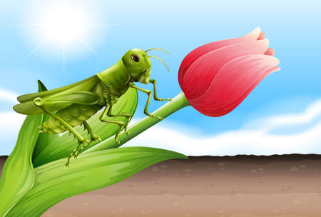 pinchers: Illustration of a grasshopper and the flower bud Illustration