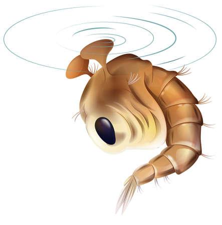 Illustratie van een mug levenscyclus - popstadium