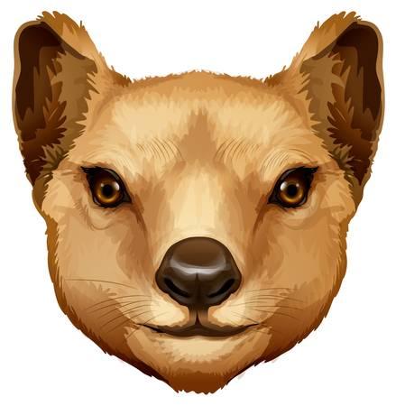 chordata: Illustration of a Tasmanian tiger head