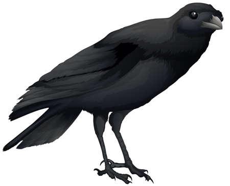Illustration showing a black crow Illustration