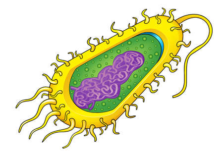bacterial: Illustration of a bacteria cell