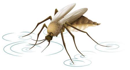 dengue: Illustrazione che mostra una zanzara