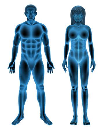 Illustration du corps humain mâle et femelle
