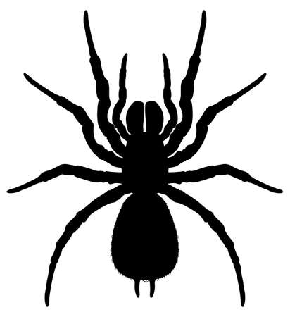 arachnida: Illustration showing a silhouette of a spider Illustration