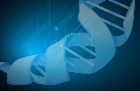 adn humano: Ilustraci�n del ADN humano