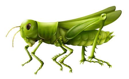 insecto: Ilustración que muestra un saltamontes