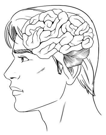An illustration of the human brain Vector