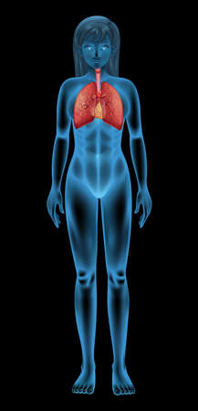 cavity: Illustration of the human respiratory system