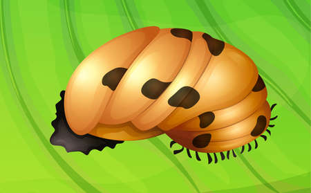 underside: Illustration of a ladybug life cycle - pupa stage Illustration