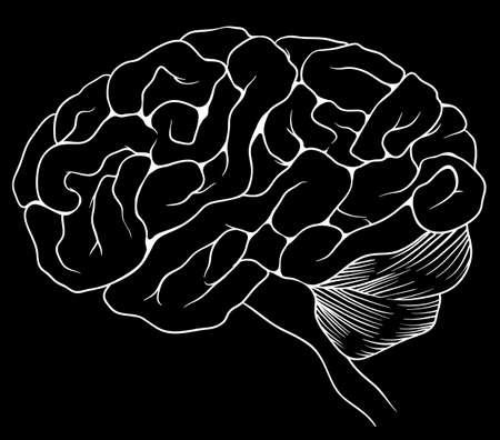An illustration of the human brain Stock Vector - 20060124