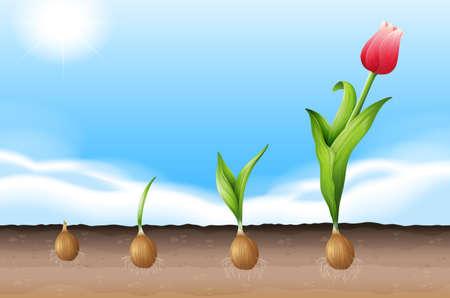 Illustratie toont een groeiende tulp Vector Illustratie