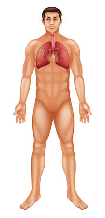 vital: Illustration of the human respiratory system