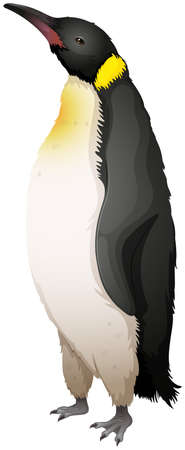 Illustration of the emperor penguin Stock Vector - 20185341