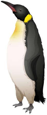 emperor: Illustration of the emperor penguin
