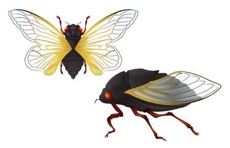 insecta: Illustration of the Cicadas Illustration