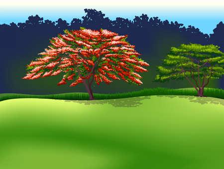 stoma: Illustrazione degli alberi