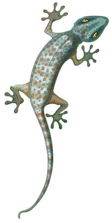 lagartija: Ilustración del gecko tokay Vectores