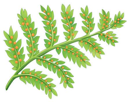 Ilustración de una planta de helecho
