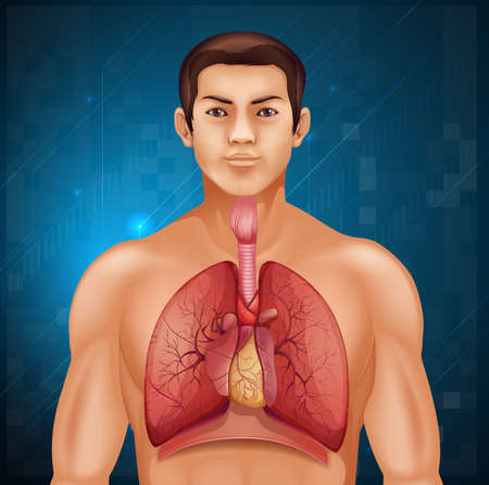 cavities: Illustration of the human respiratory system
