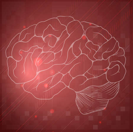 Illustration of the Human Brain Stock Vector - 20185405
