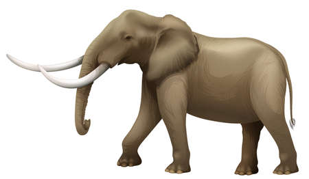 Illustration of the elephant Illustration