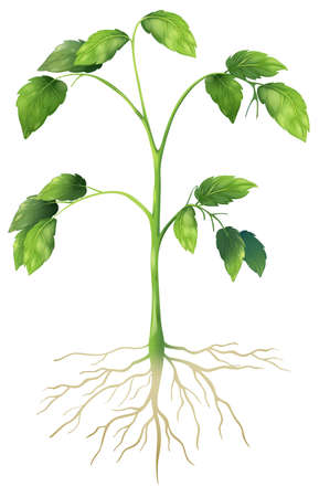 cuticle: Illustration showing a green plant